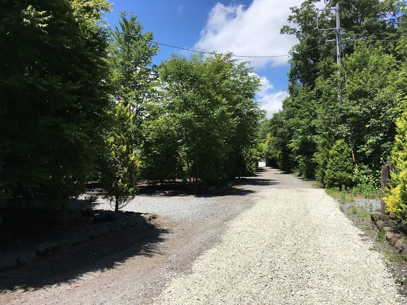 道路(南側から撮影)